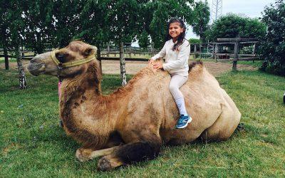Kedvezmény a Bella Állatparkba
